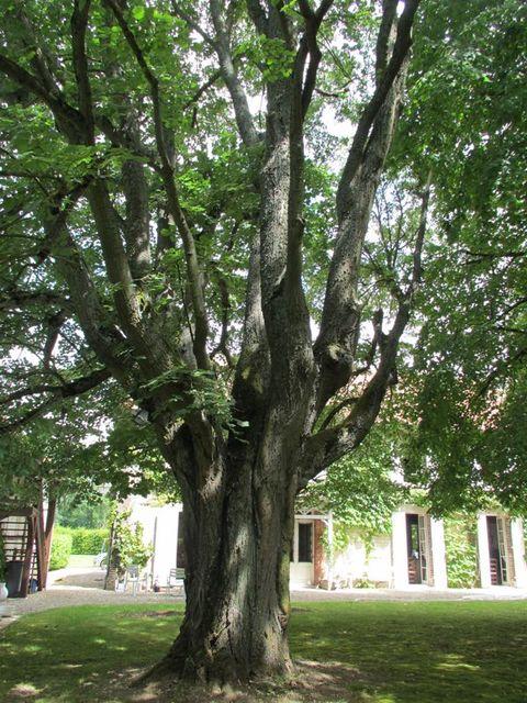 arbres, nature